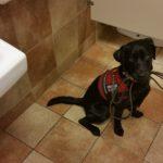Roxy holding leash 8.23.16