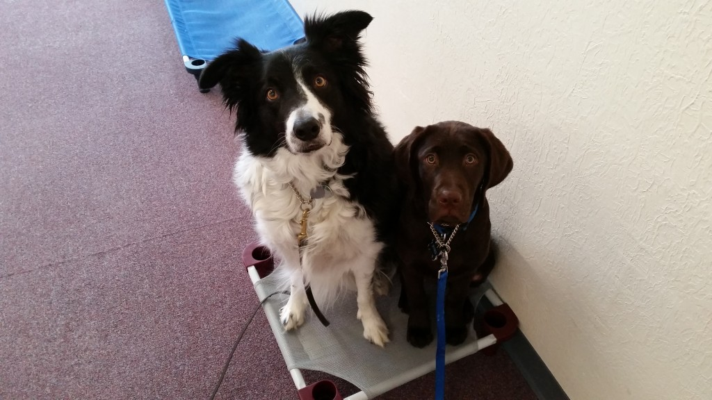 CODT's Moe share PLACE with Boris the lab puppy in for training